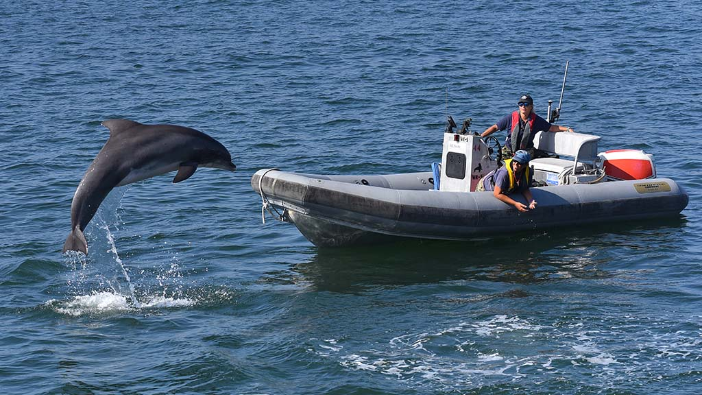 The U.S. Navy demonstrates its marine mammal training during Fleet Week at the Broadway Pier.