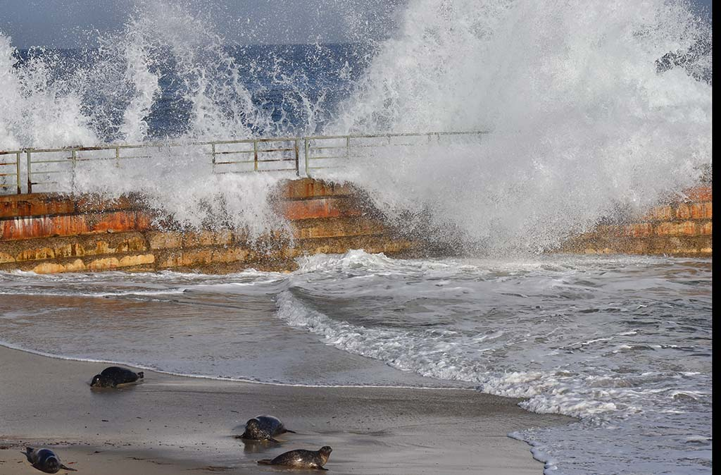 Seals move away from waves crashing into the sea wall at the Children's Pool in La Jolla.