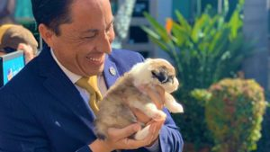 Assemblyman Todd Gloria holds puppy at announcement of bill to restrict pet stores on sale of certain animals.
