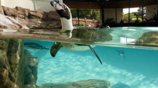 Marine Life Animal Rescue