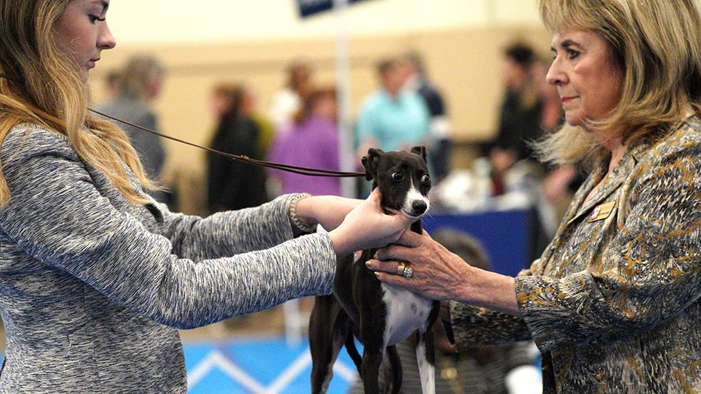A dog looks nervous as a handler (right) begins to examine it at the Silver Bay Kennel Club dog show.