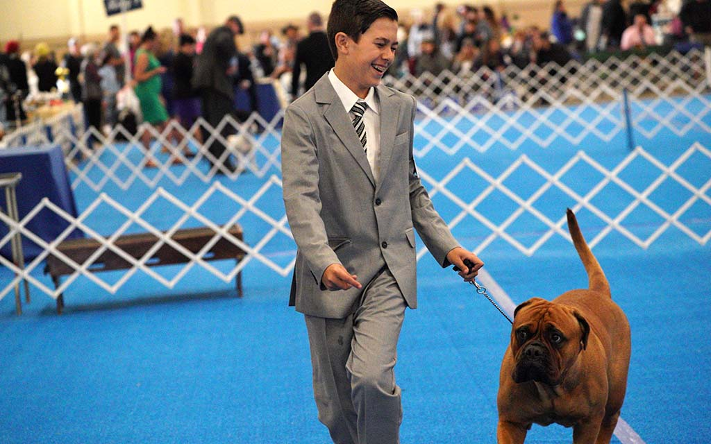 Brody Rotell, 13, from San Diego is a junior handler for his bull mastiff.