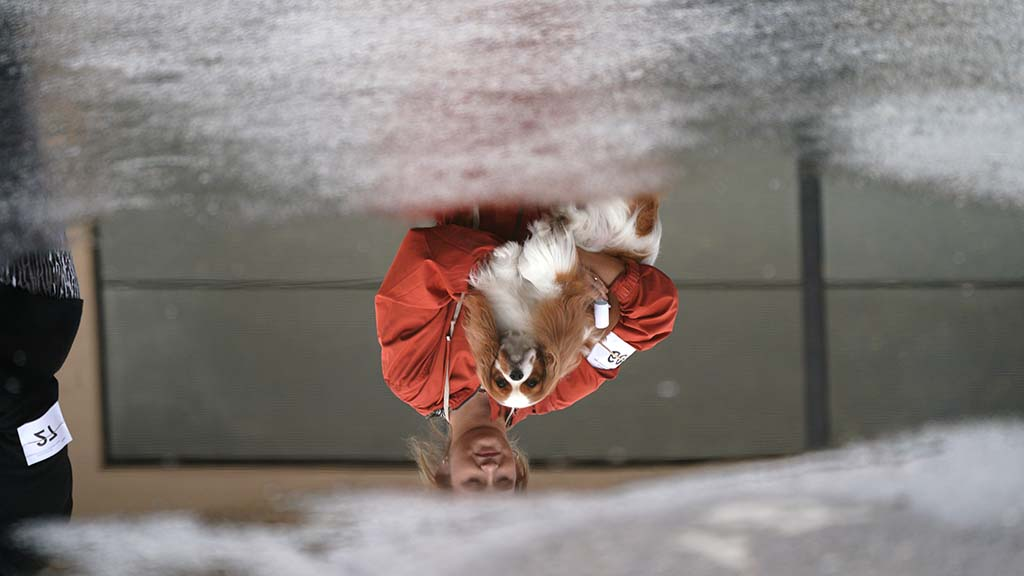 A handler and her Cavalier King Charles spaniel is reflected in a puddle outside the exhibit hall.