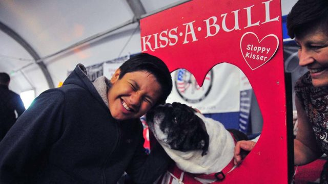 Matthew Munger, 12, of Oceanside, gets a kiss at the Kiss A Bull booth at the Meet the Breeds area of the dog show.