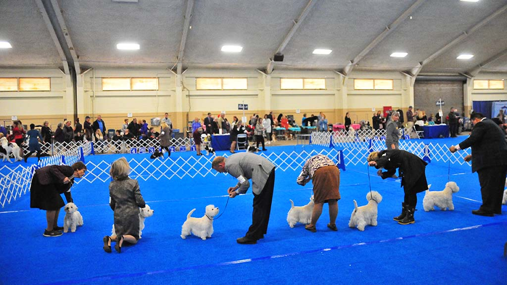 About 1,600 dogs are competing in the Silver Bay Kennel Club dog show at the Del Mar Fairgrounds.
