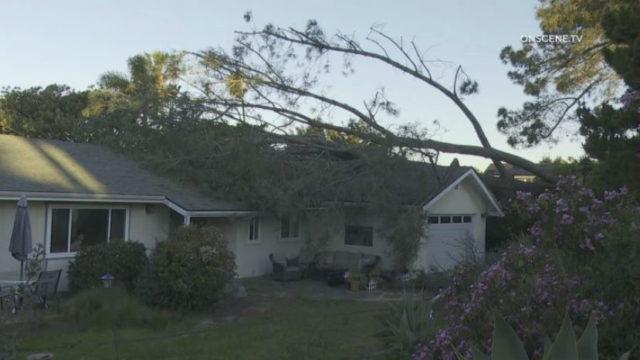 Tree down in Encinitas