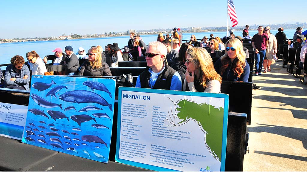 Guests aboard a Flagship boat head out several miles off the San Diego coast to get a glimpse of whales and dolphins.