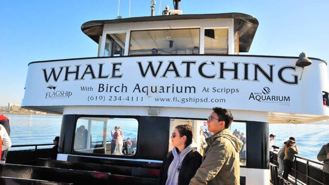 Flagship, Hornblower Cruises, Next Level Sailing, H&M Landing and San Diego Whale Watch are among the companies offering whale watching tours.