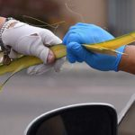 Palms were distribute at several parishes throughout the diocese in church parking lots.