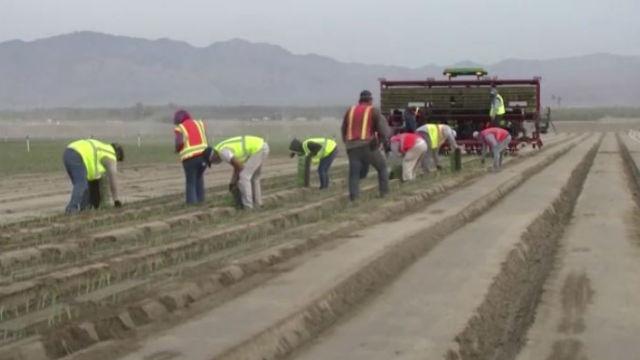 Farmworkers in the Coachella Valley