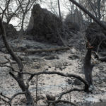 Charred trees and ash from the wildfire