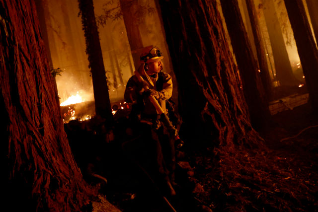 Firefighters in a redwood grove