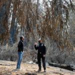 Gavin Newsom in charred Big Basin State Park