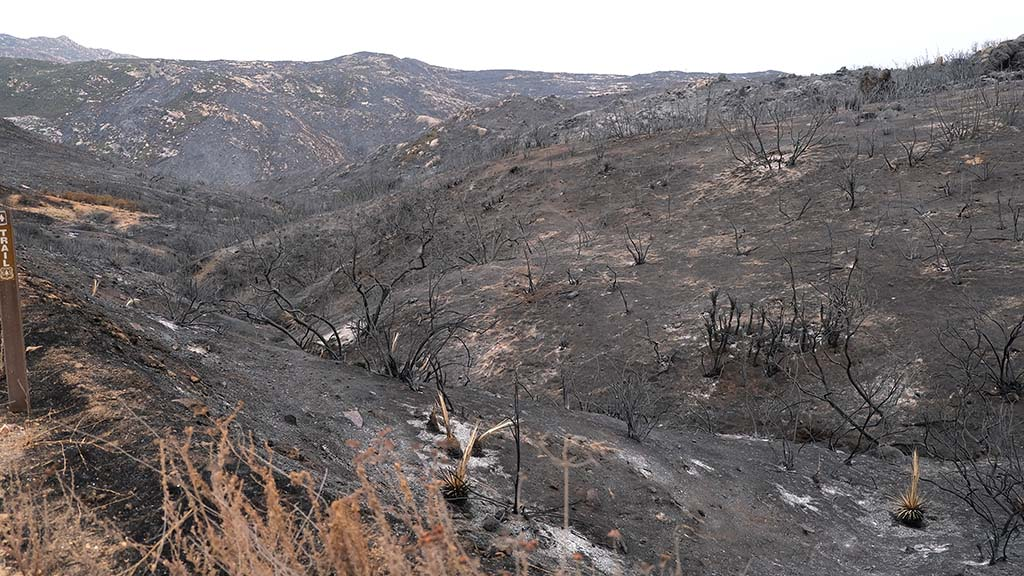 Firefighters doused fire on more than 17,000 before Santa Ana winds could spread the fire.
