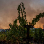Smoke billows behind a vineyard