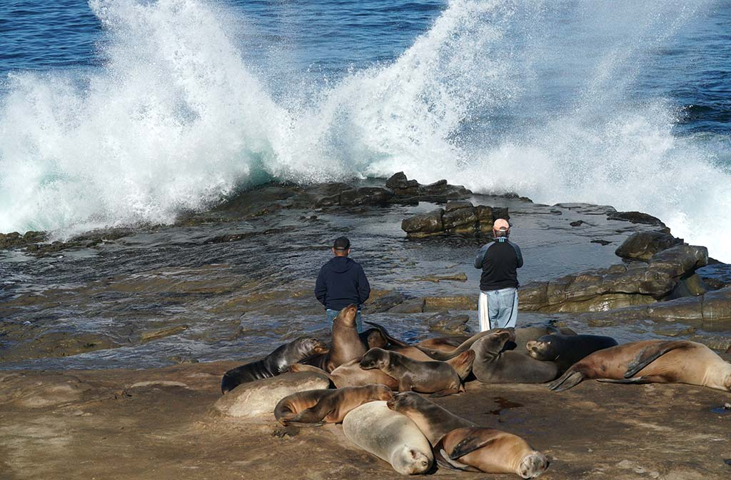 Photographers got a closer look at the 7.5 foot tide in La Jolla in front of snoozing sea lions.