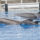 'Super Joyous Occasion': 2 SeaWorld Dolphins Give Birth Within Hours