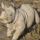 With Name of Safari Park's New Calf, Southern White Rhinos Now Have a Future