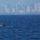 Peek Season: Whale Watching Off San Diego Will Thar-She-Blows You Away