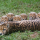 San Diego Zoo Shares Adorable Images of Large Cheetah Cub Litter