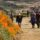 Lake Elsinore 'Super Bloom' Trail Reopens to Huge Crowds
