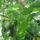 Avocado Recall Underway Over Listeria Concerns After Escondido Company Prompts Alert