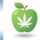Green Apple Marijuana Collective Raided in Valley Center; 3 Arrested